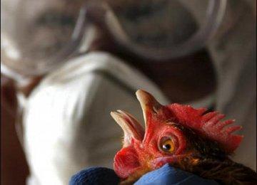 Azerbaijan, Iraqi Kurdistan Ban Poultry Imports From Iran