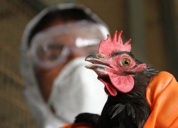 Bird flu was confirmed in dead birds along Lake Geneva in Switzerland on Saturday.