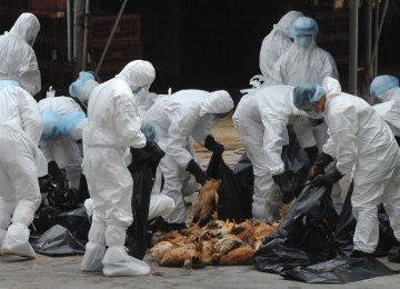 730,000 birds have been killed to prevent the spread of the disease.