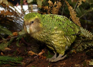 More Birds at Risk of Extinction