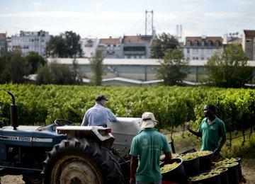 Portugal Economy Outgrows Eurozone