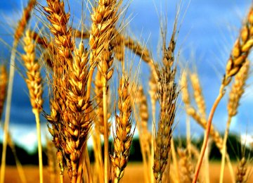 Russia's wheat output is anticipated to set a new record.