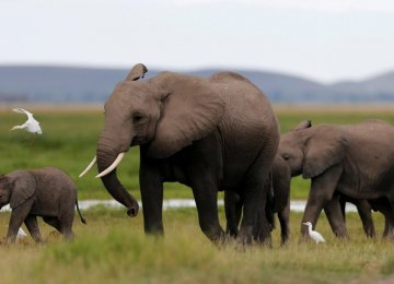 Elephant Poaching Costs Africa Millions