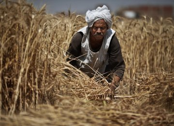 Egypt is the world's largest wheat importer.