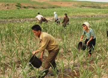 Markets Influence North Korea Growth