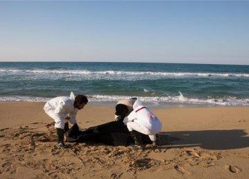 Libya: 87 Refugee Bodies Wash Up on Beach