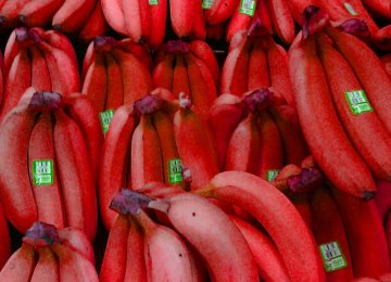 Hoax About Red Bananas Exposed