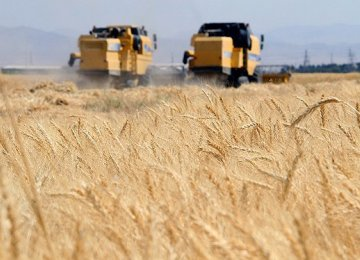 Gov't Wheat Purchase Tops 7m Tons