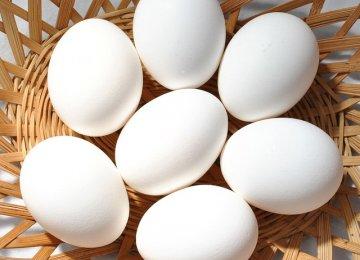 Egg Exports Decline