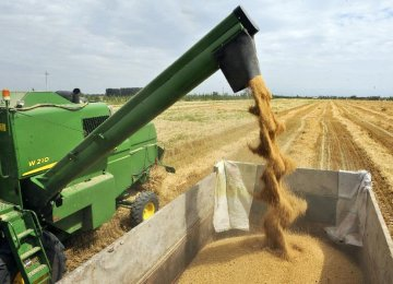 Wheat Production at Record High