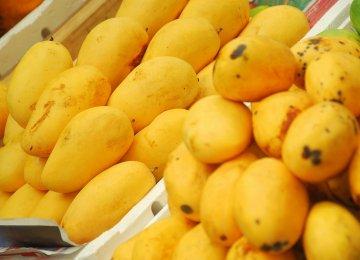 Pakistan Mango Exports Facing Threat of Ban