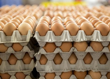 Egg Exports Stop