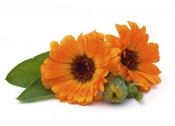Herbal Medicine Capacity High
