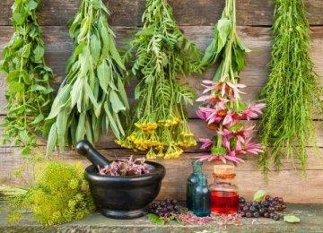 Medicinal Herbs Production