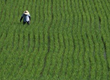 Pesticide-Free Rice Farms