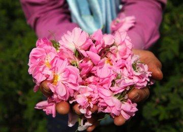 Varamin Farmers Produce Rosewater