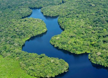 Amazon Basin Drought Stunts Earth's Lungs