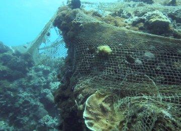 Saving Coral Reefs of Kharg, Kharko Islands