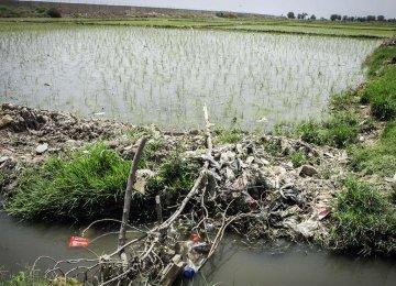 Tehran Farmlands Destroyed Over Wastewater Irrigation