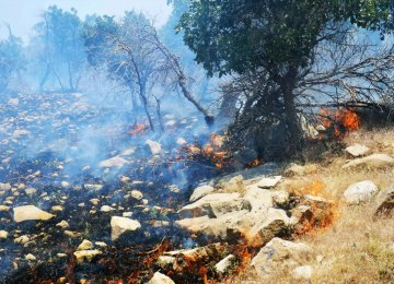 Counting the Cost of Wildfires