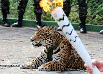 Jaguar Shot Dead in Olympic Ceremony