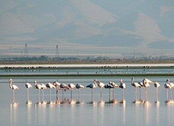 Birds Estrangement Grows Despite Ramsar Convention