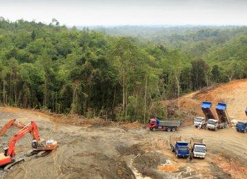 Indonesian Palm Oil Giants Disband Green Pledge
