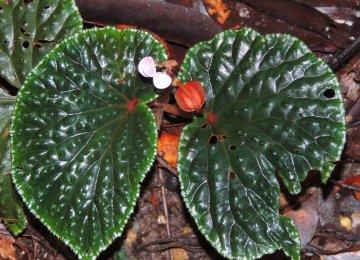 Plants Risk Extinction as Farms, Logging Expand
