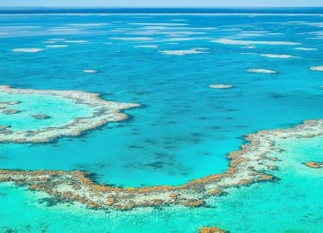 Reef Bleaching to Inflict Heavy Blow on Australian Tourism