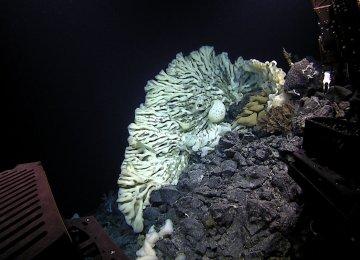 Minivan-Size Old Sponge Found in the Pacific Ocean
