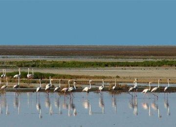 Respite for Gavkhouni Wetland