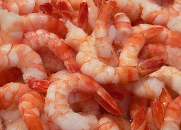 Shrimp Exports Up 10%