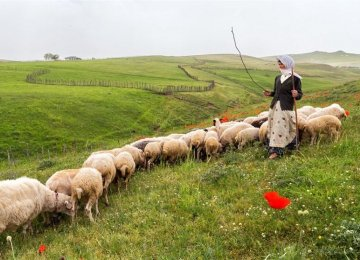 Nomads Produce 5.7m Tons of Goods Annually