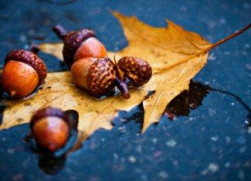 average rainfall will see a 10-20% decline this autumn.