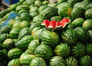 Watermelon Exports Down