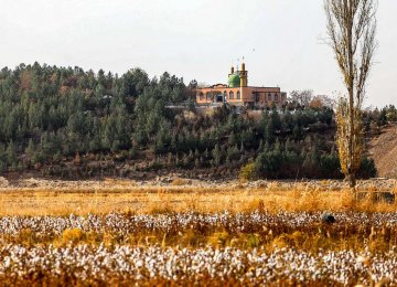 Iran Set to Begin GM Cotton Cultivation: Report