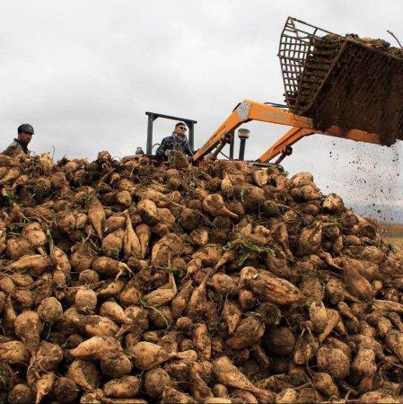 West Azarbaijan: Iran's Sugar Beet Production Hub