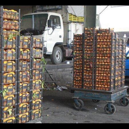 Mazandaran Horticultural Exports at $140m