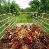 Iran Palm Oil Imports See 23% Decline - Report