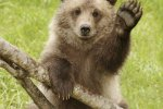 Bear Cub Dies in Car Crash