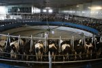 Dairy Exports to Hit $1b