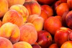 Peach, Nectarine Output Over 1m Tons
