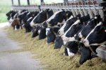 Animal feed accounts for 70% of the price of meat, chicken, eggs and dairy products.
