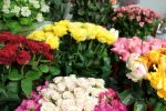 Flower Exports Earn $2.4m in  4 Months