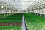 Greenhouse Cultivation Up 38%