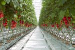 Iran's Agriculture Ministry plans to transfer all vegetable farms to greenhouses within 10 years.