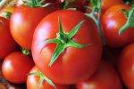 Tomato Exports Earn $35m