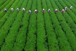 China's Arable Lands on the Decline