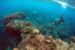 Scientists Testing Corals to Counter Climate Change