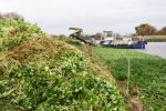 British Agency Gears Up to Tackle Invasive, Killer Plant